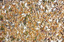JR Birds Semena k naklíčení pro korely 1 kg